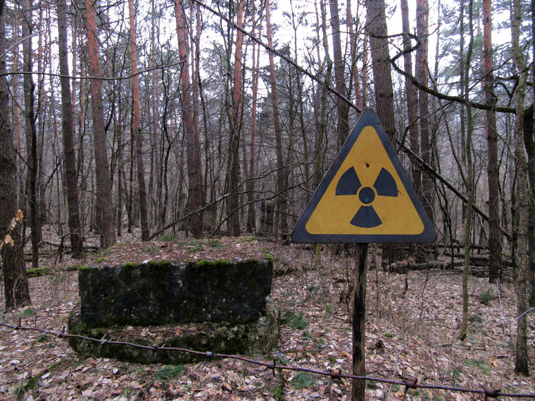 nuclear, Red forest, Chernobyl, radiation